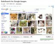Google SafeSearch – Cat (Katze)