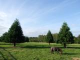 Bild 6 – Landschaft mit Pferd