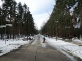 Wald auf dem Weg zur SEO-Campixx