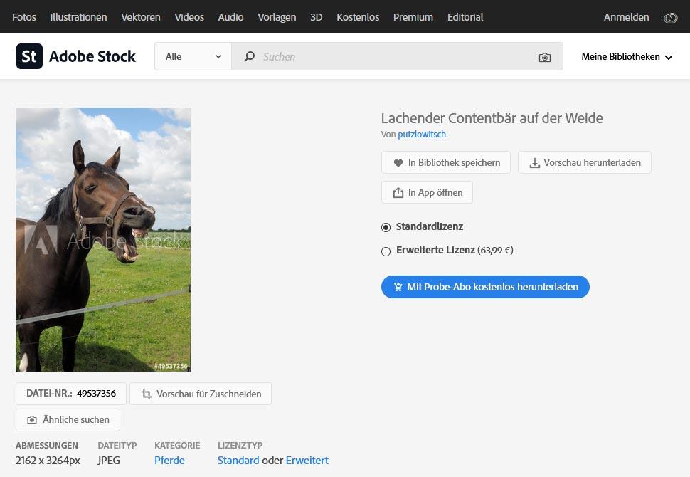 Contentbär bei Adobe-Stock